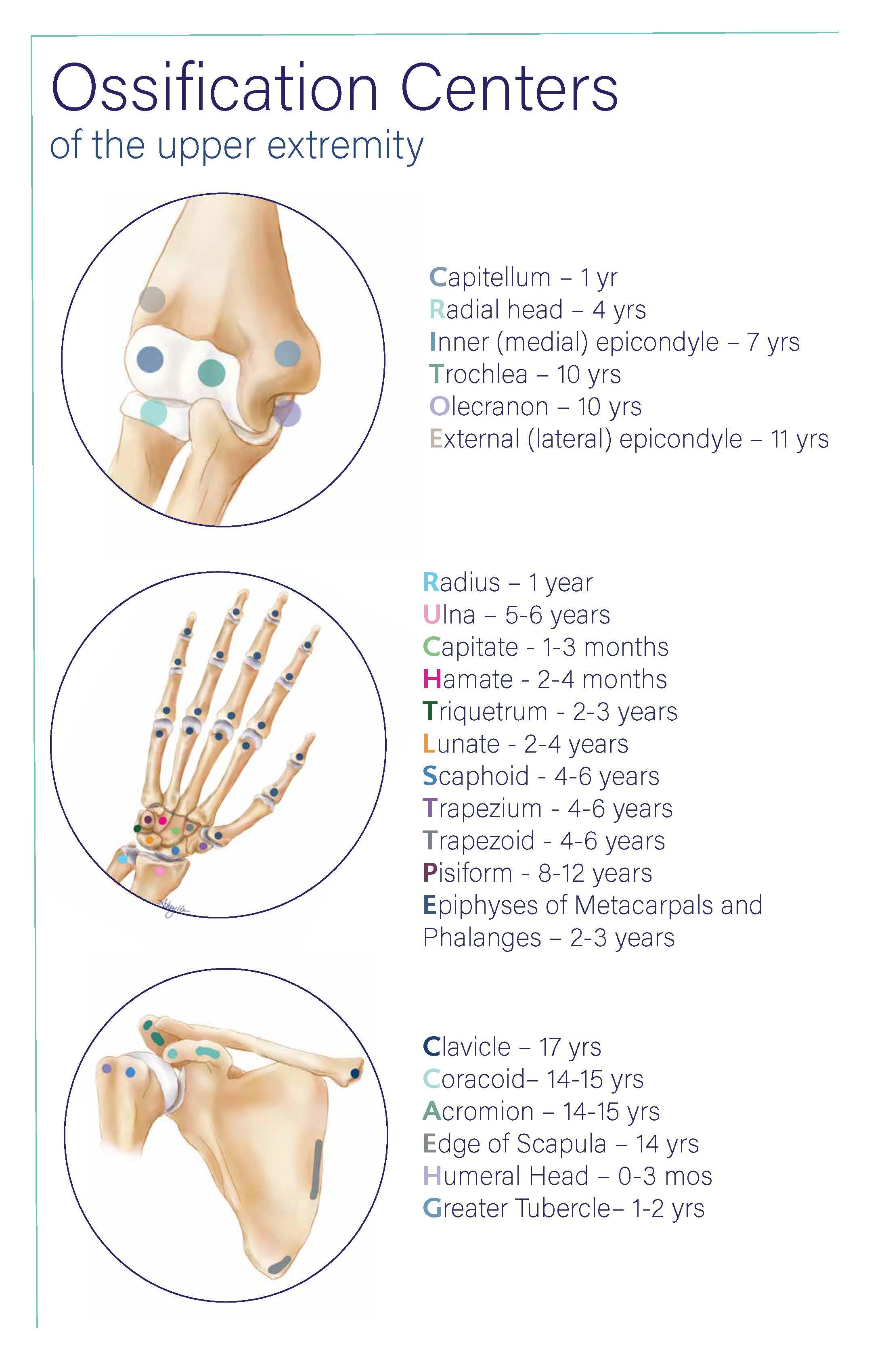 Ossification Centers.jpg