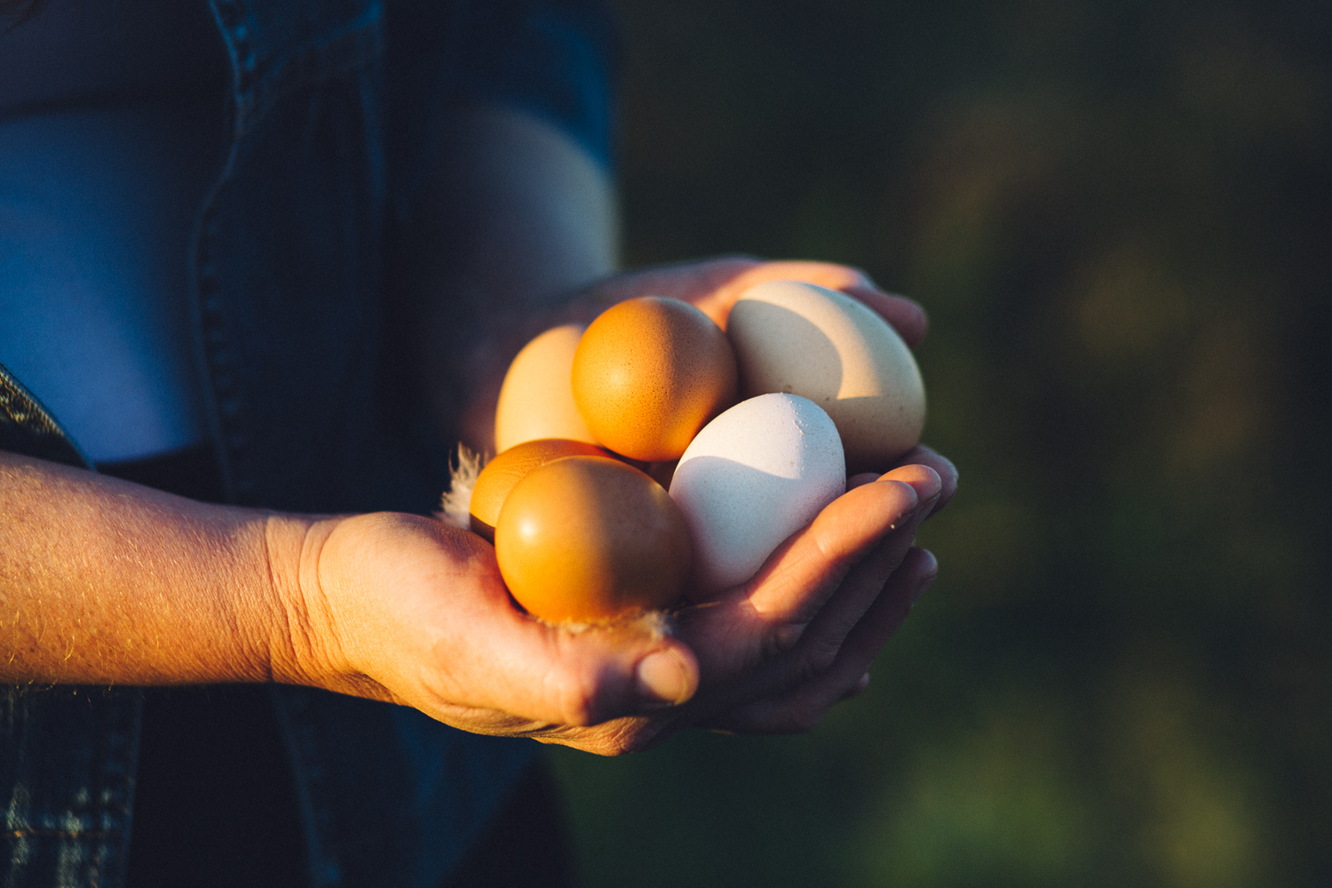 Amy Paul holding eggs, Walkerville, South Gippsland, 2016, Source: Museums Victoria, Photographer: Catherine Forge
