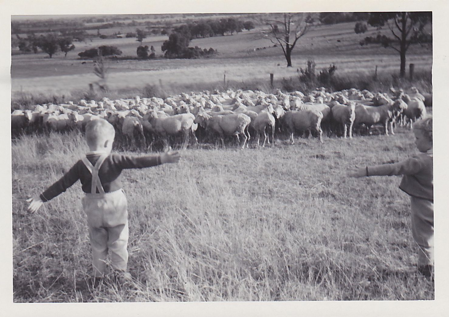 Chas Dale (Liza's twin brother, left) and Liza Dale-Hallett (right) rounding up sheep at their family farm, Tynong, 1967, Source: Supplied, Liza Dale-Hallett