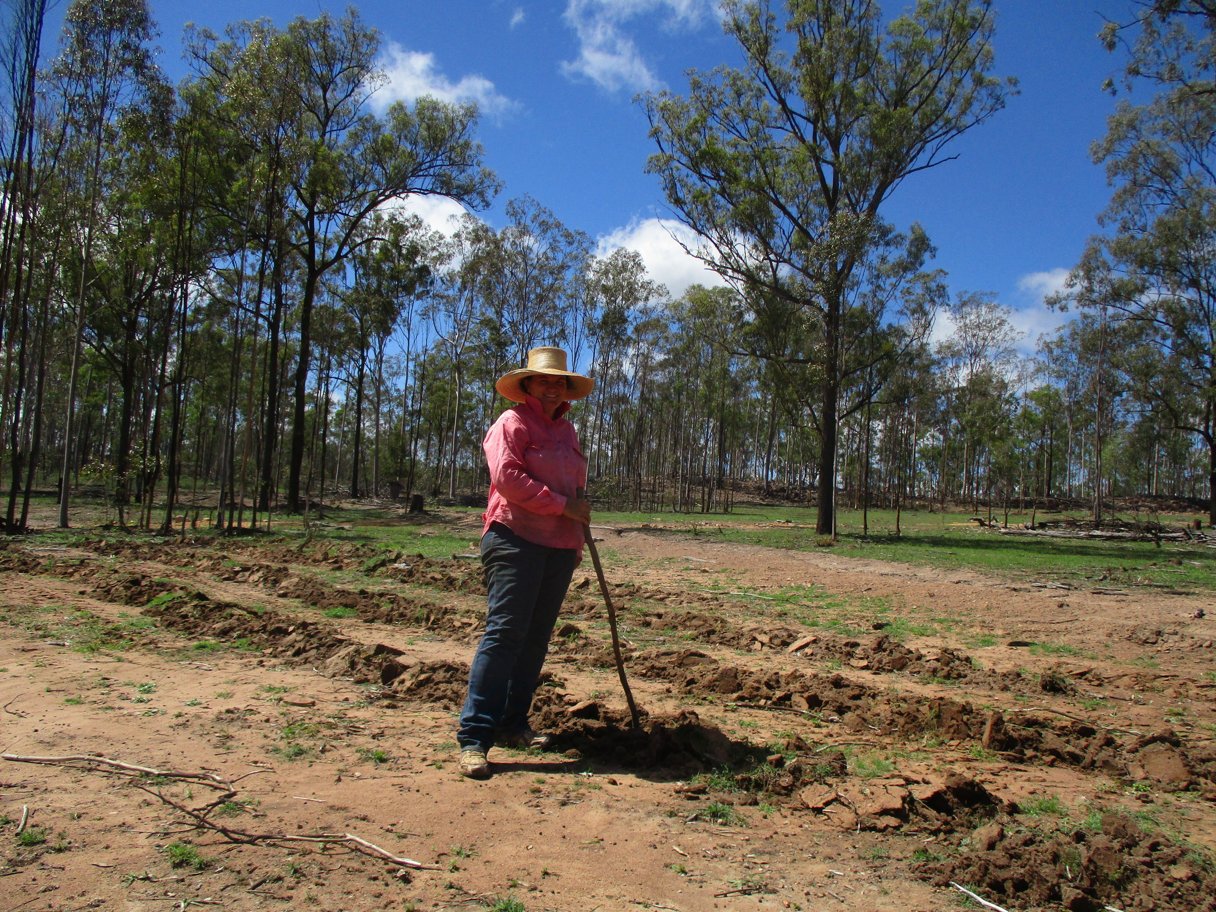 Lisa planting 'Pangola Grass' after cyclone Debbie, 2017, image supplied.