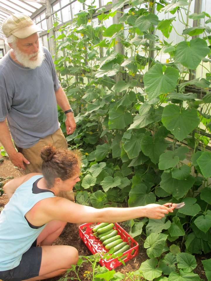 Dartmouth Organic Farm manager instructing Jaclyn on harvesting cucumbers in a retrofitted greenhouse, image supplied.