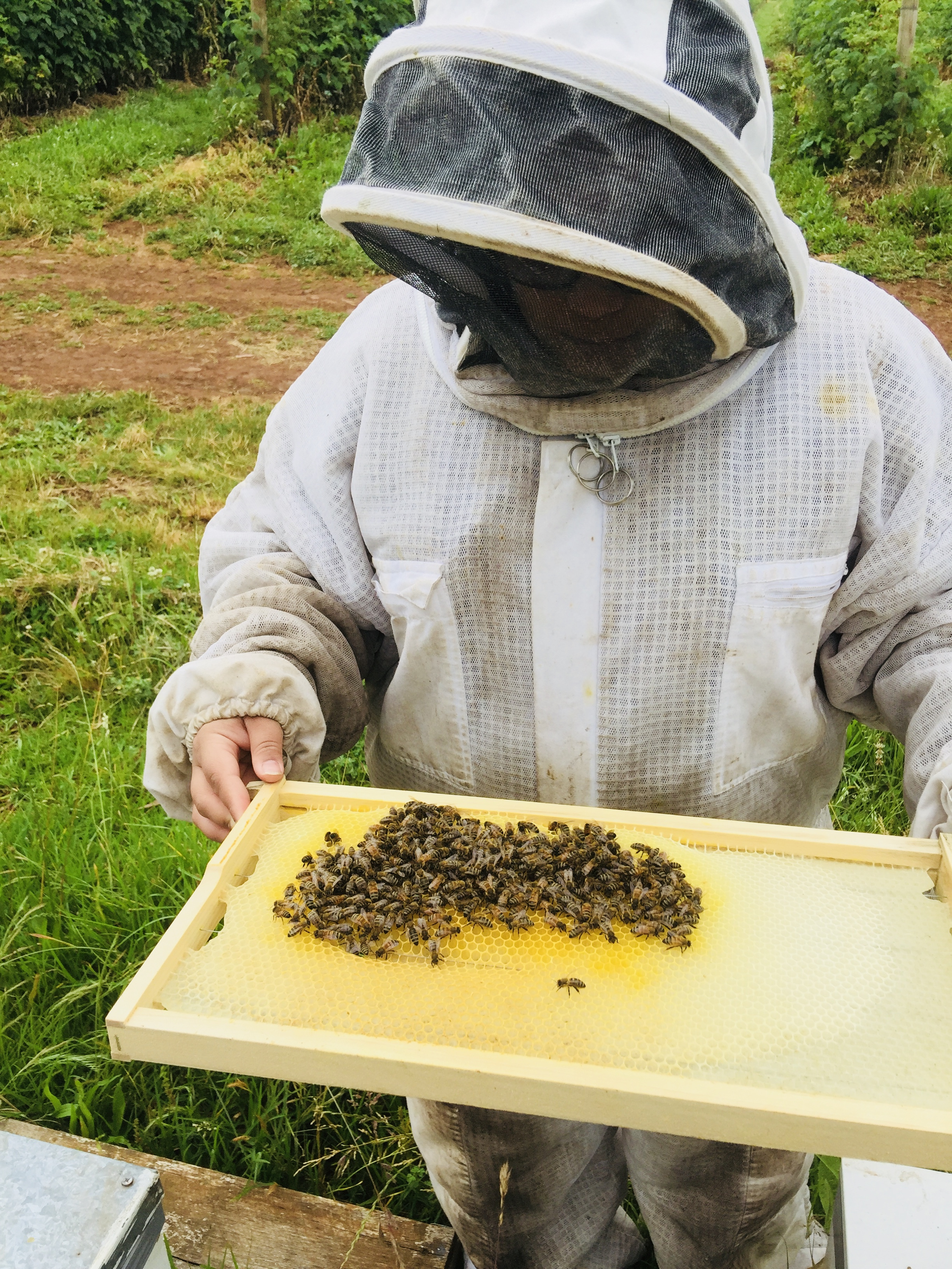 "Part of Rayali's work experience and internship: ""Here I'm immersing myself in beekeeping. On a side note,   did you know that 65% of agricultural production in Australia depends on pollination by European honeybees and that one in every three mouthfuls of food that we consume comes from the aid of pollination by honeybees!"""