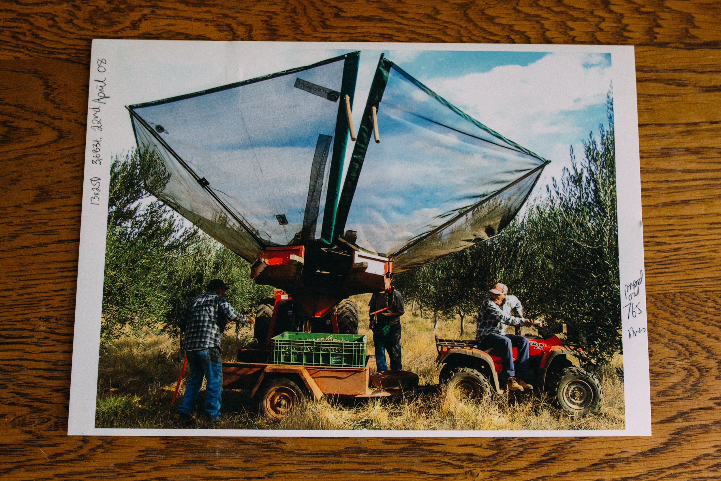 Workers hard at work on the olive groves, 2018, Image: supplied by Sally Hall.