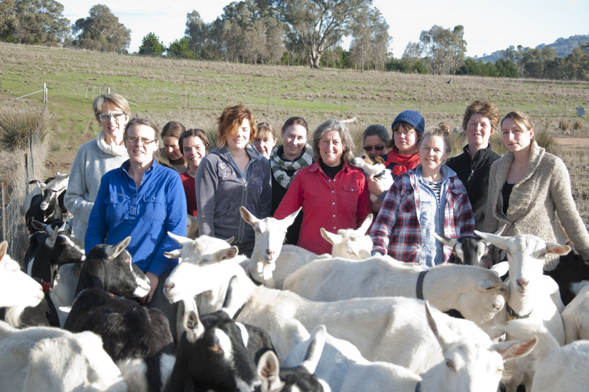 'Staff meeting' at Holy Goat Farm, Castlemaine, 2013, image courtesy  Holy Goat