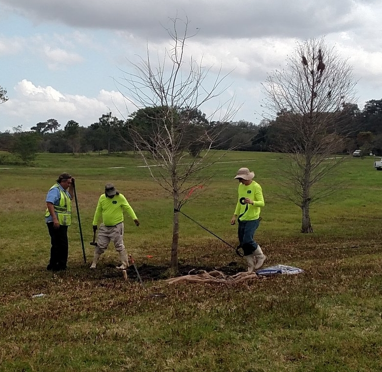 IMG_20160224_140544092 planting and tree relocation.jpg