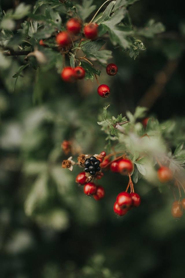 berries-irelands