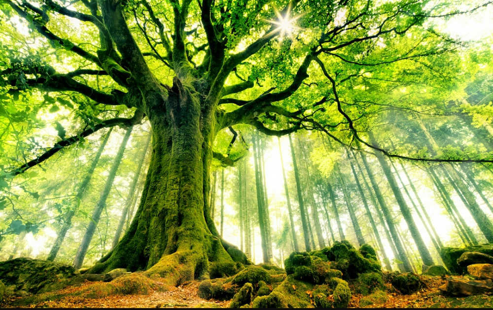 trädets rötter.jpg