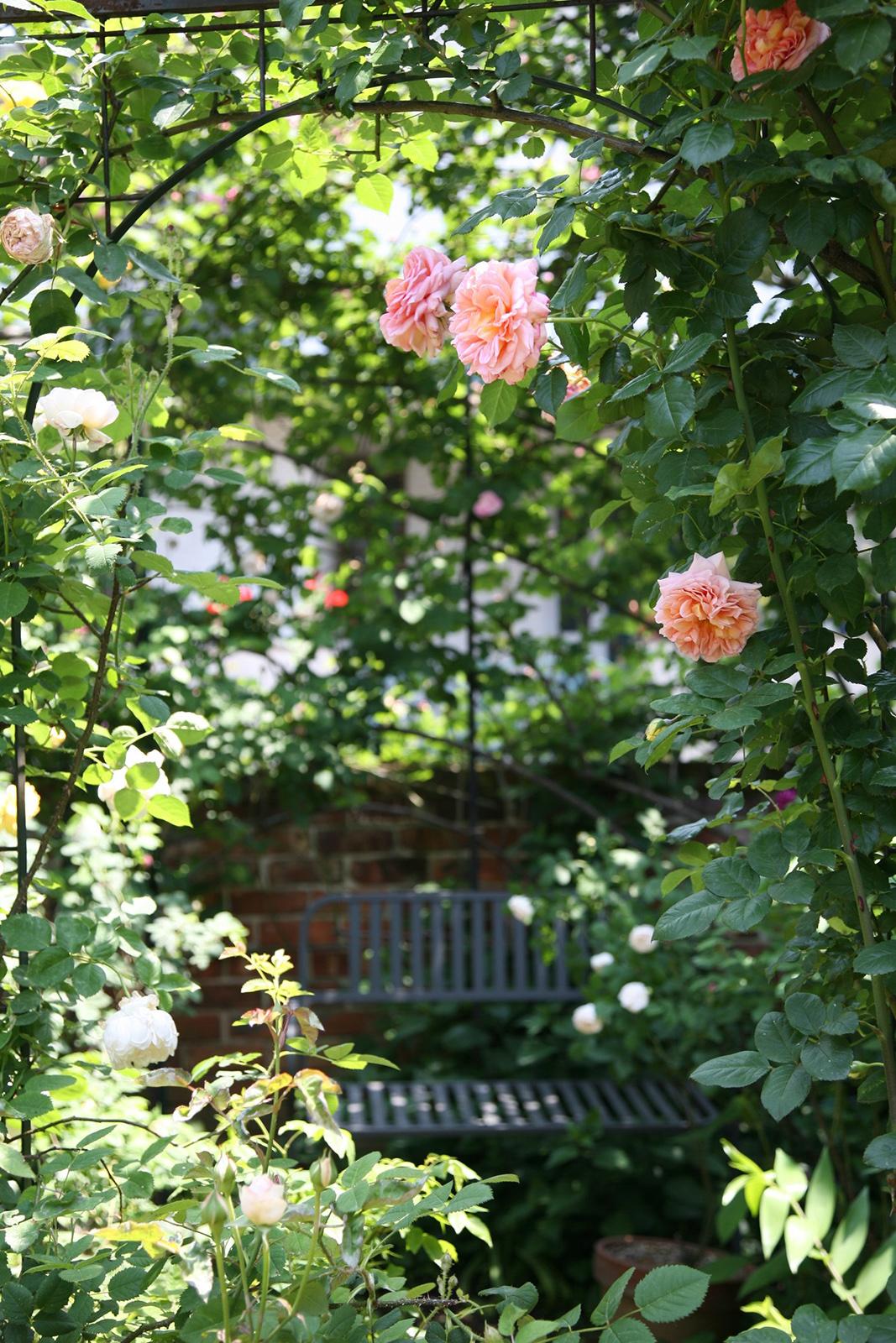 gardenfl006_.jpg