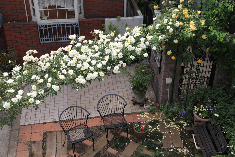 gardenfl012.jpg