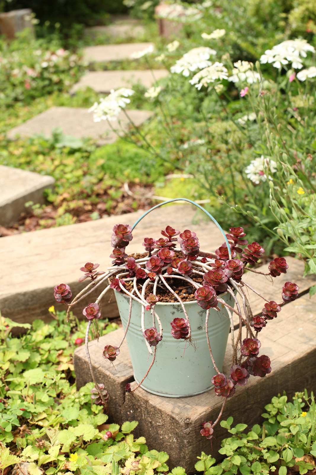 gardenfl019.JPG