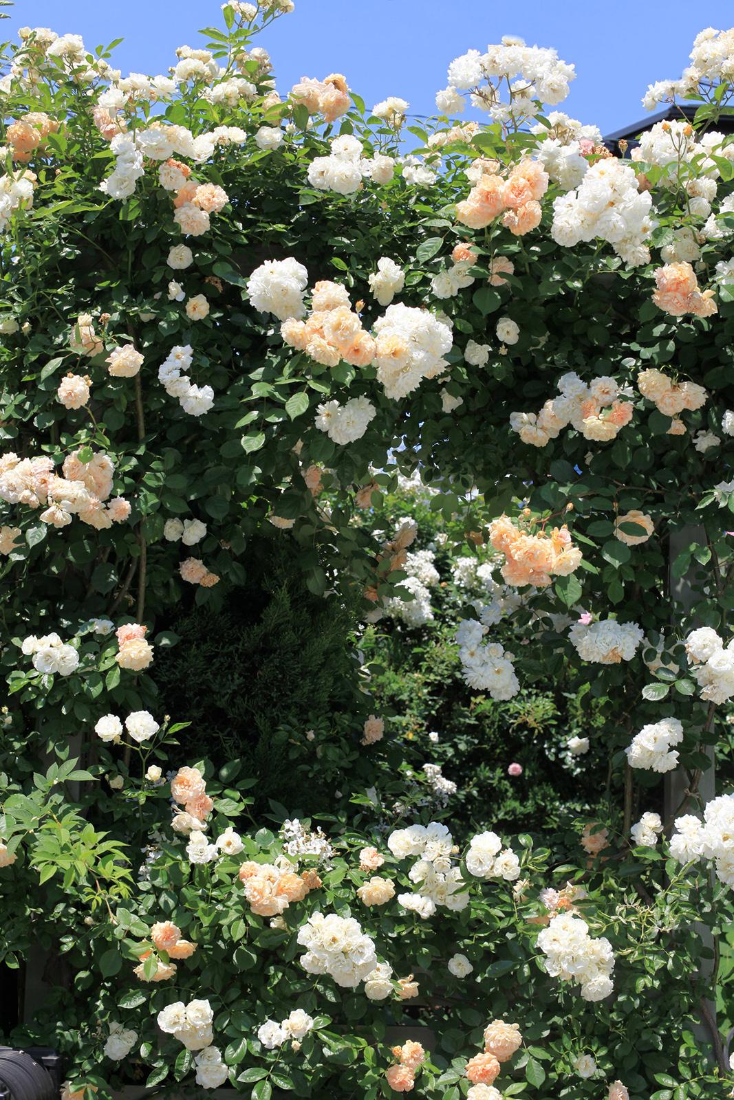 gardenfl020.jpg