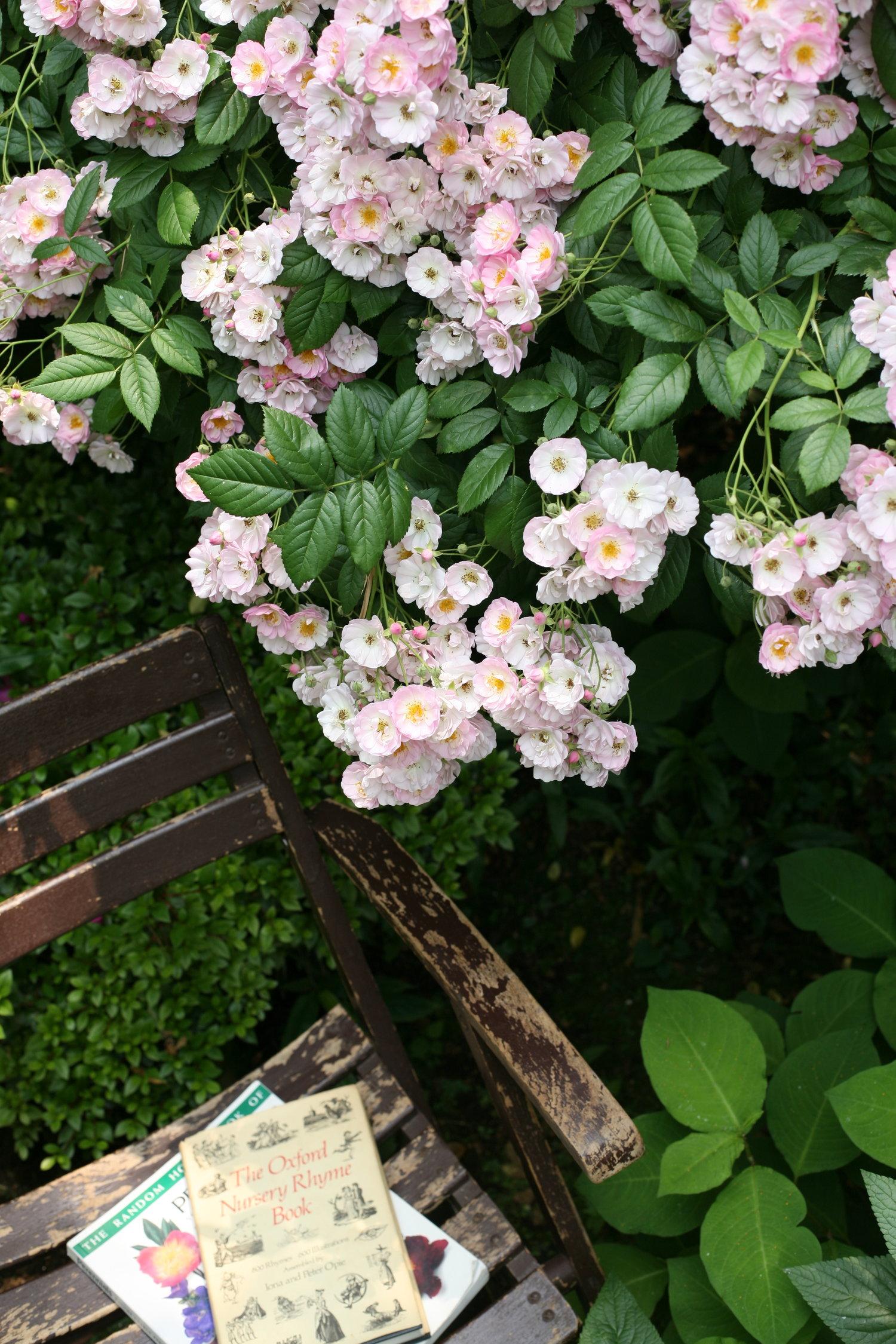 gardenfl028.JPG