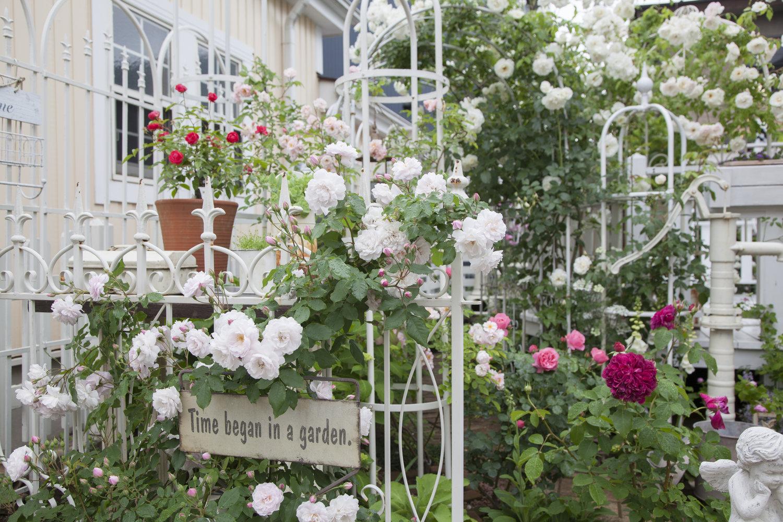 gardenfl035.jpg