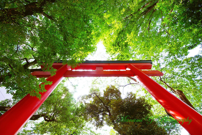 新宿・花園神社 2017年8月某日