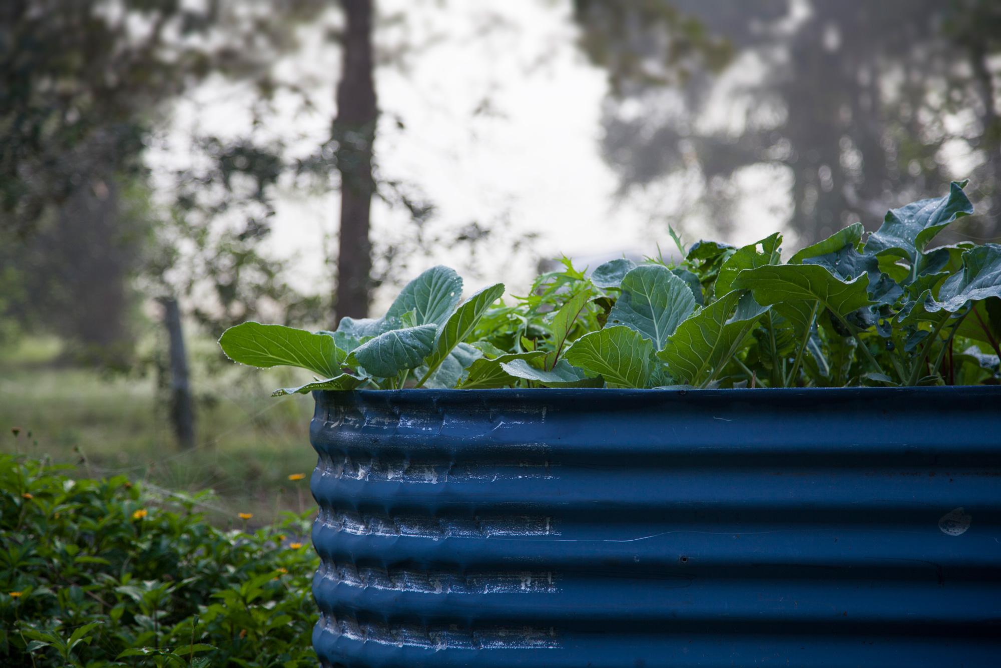 Organic recycled garden installations