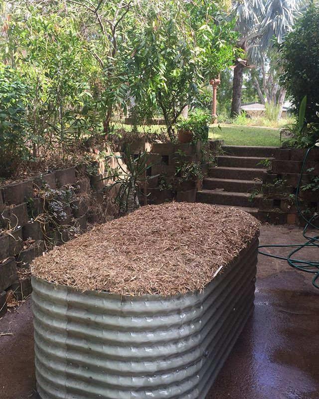 The 'to be' garlic garden. Wombat Garden Full Installation - $645 Includes a beautiful blend of all certified organic soil, compost, worm castings, activated biochar, mulch and seedlings. Happy gardening 😀