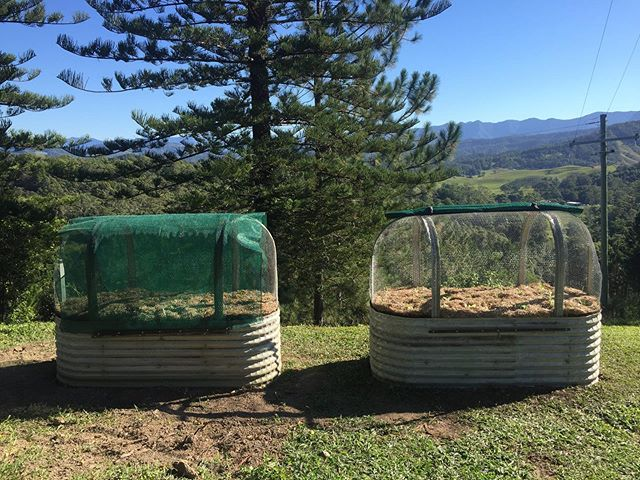 What a spectacular view @Dungay NSW 2x Wombat Gardens with Cage netting and roll down shadecloth.  All certified organic soil, compost, biochar, nutrients, seedlings and mulch. I am very happy to see this family of 5 now set up to grow their own herbs and veggies.