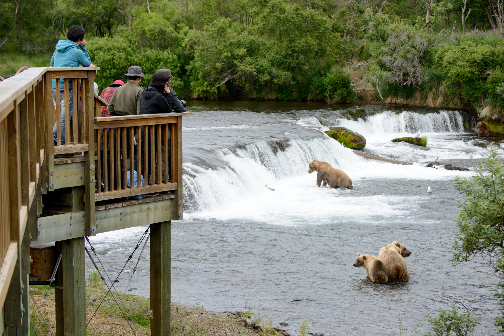 Brooks Camp Bear Bridge // Photo: Mark Meyer