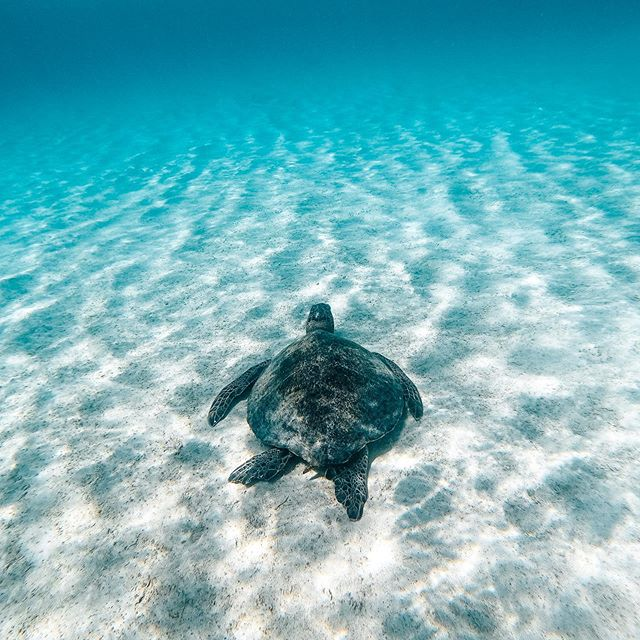 A clear horizon for this turtle. . What we hope the future will look like for future generations of turtles, an ocean without plastic. What choices are you making today for our oceans? . Taken by our founder @brinkleydavies in one of the cleanest ecosystems on the planet in the #GalapagosIslands . Don't forget there are still some of our re-usable coffee cups available with our beautiful Bunji girl on them, grab one via the link in our bio. . #ClearTides #BaluBlueFoundation #NoSingleUse #Reuse #Reduce