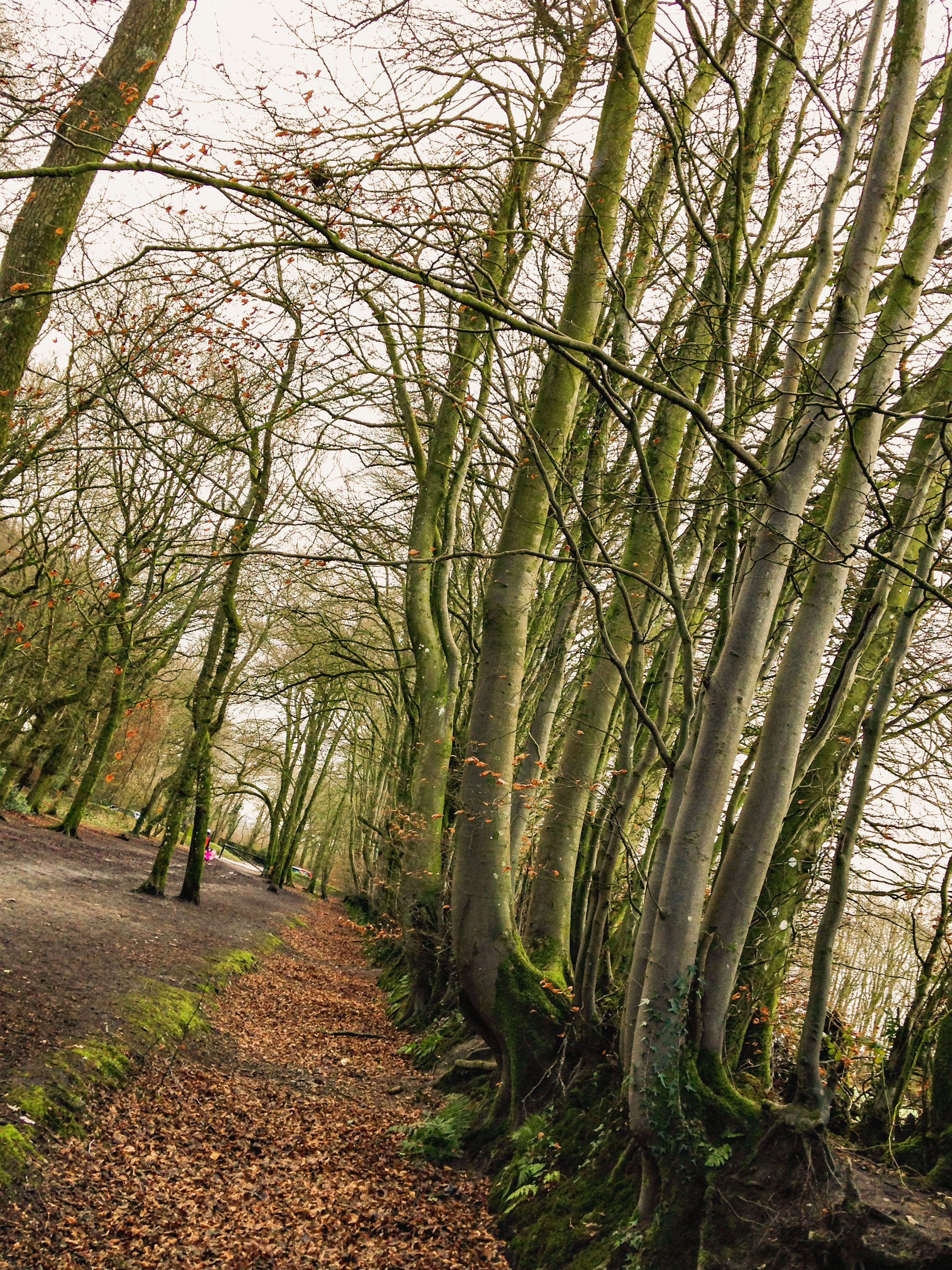 The quirky tree lined avenue leading up to Wellington Monument has all kinds of hide and seek potential