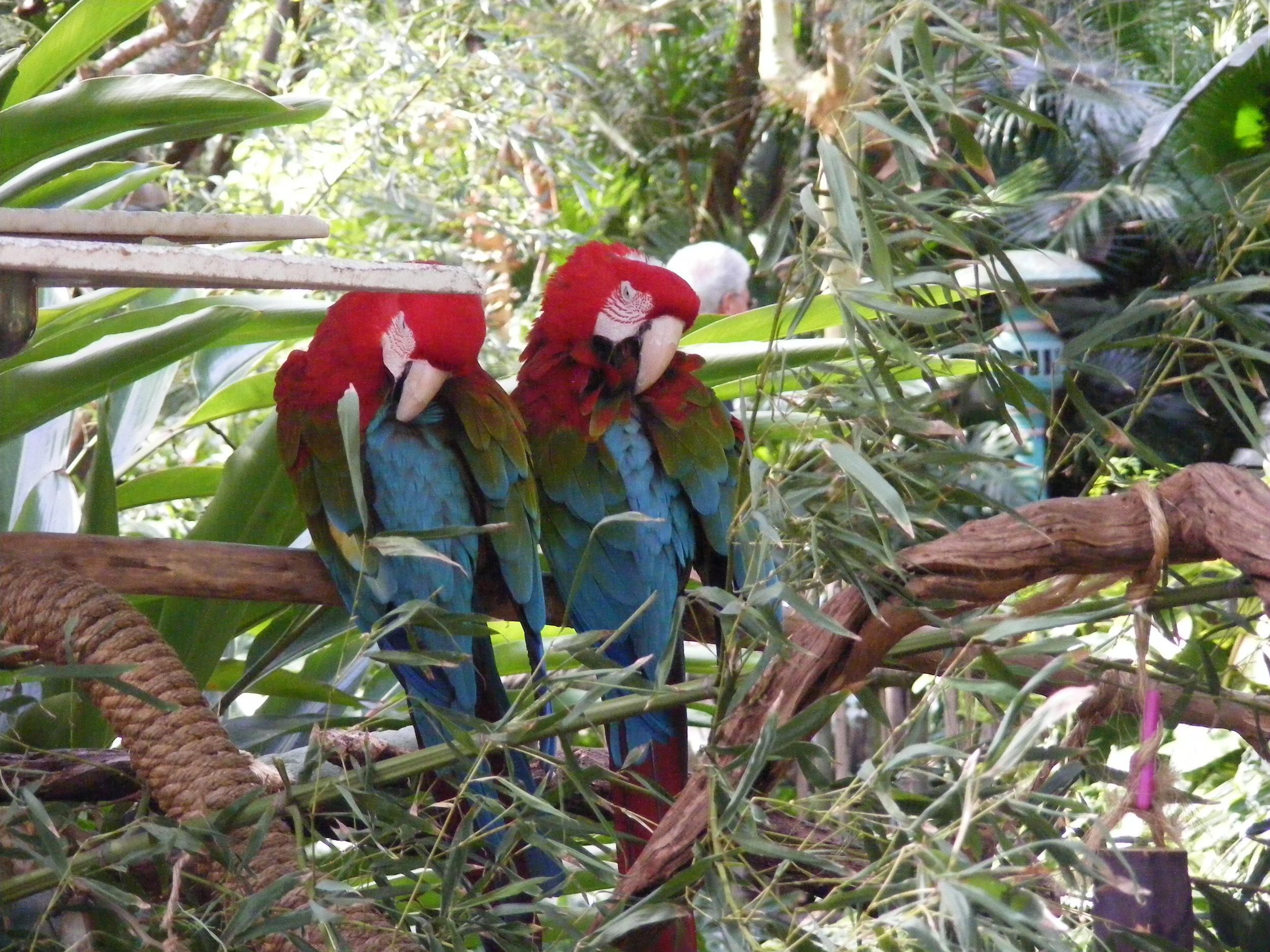 Oasis Exhibits, Oasis, Disney's Animal Kingdom