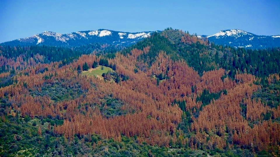 Photo taken by the U.S. Forest Service during an aerial survey in August 2015. This is just up the hill from my house, and is the aerial view of the yellow forest I was running in when I took the topmost photo in this post.