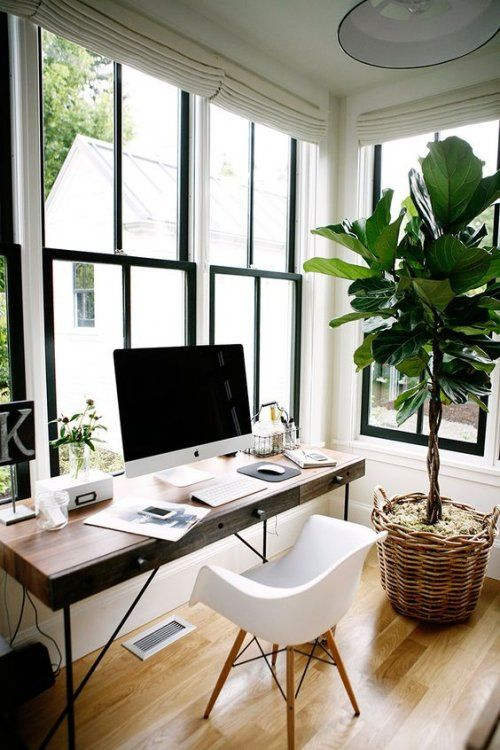 wooden floors and big plant .jpg