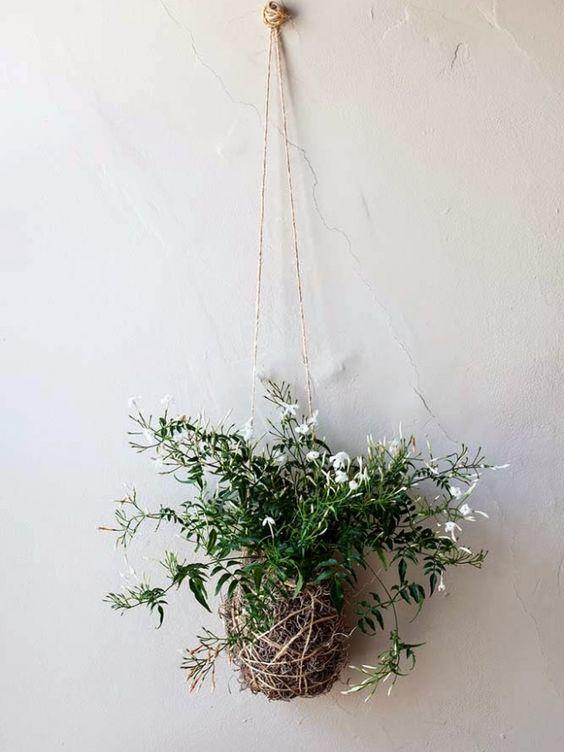 Jasmine Plant.jpg