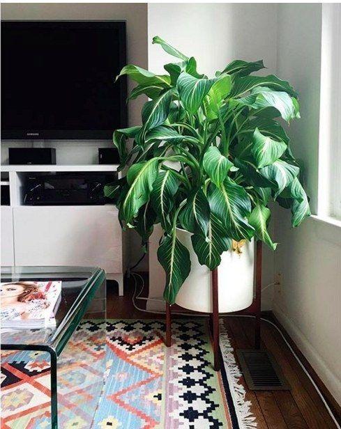 White and Wooden Plant holder.jpg