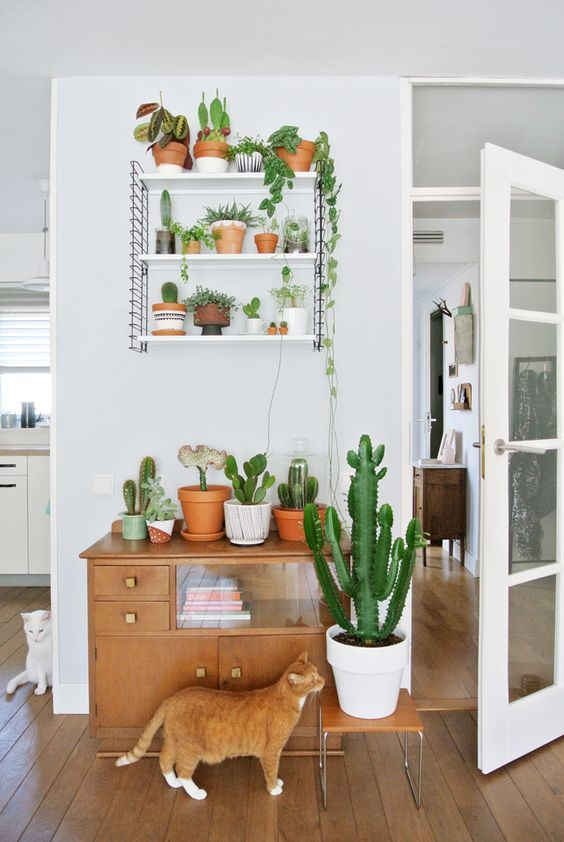 Plants on Shelf with cats.jpg