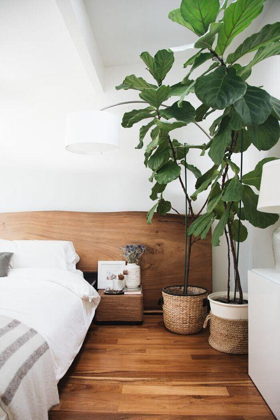 Plants in Baskets By Bed.jpg
