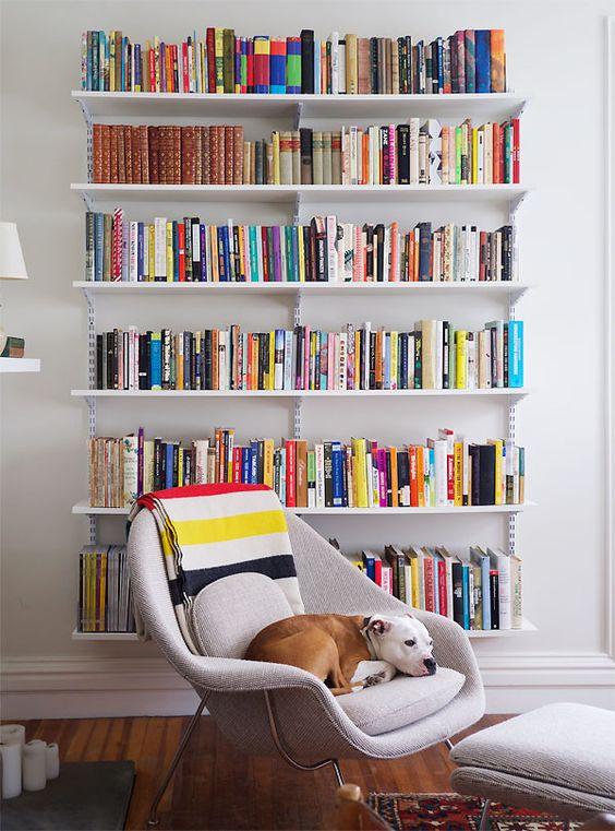 Bookshelves and dog.jpg
