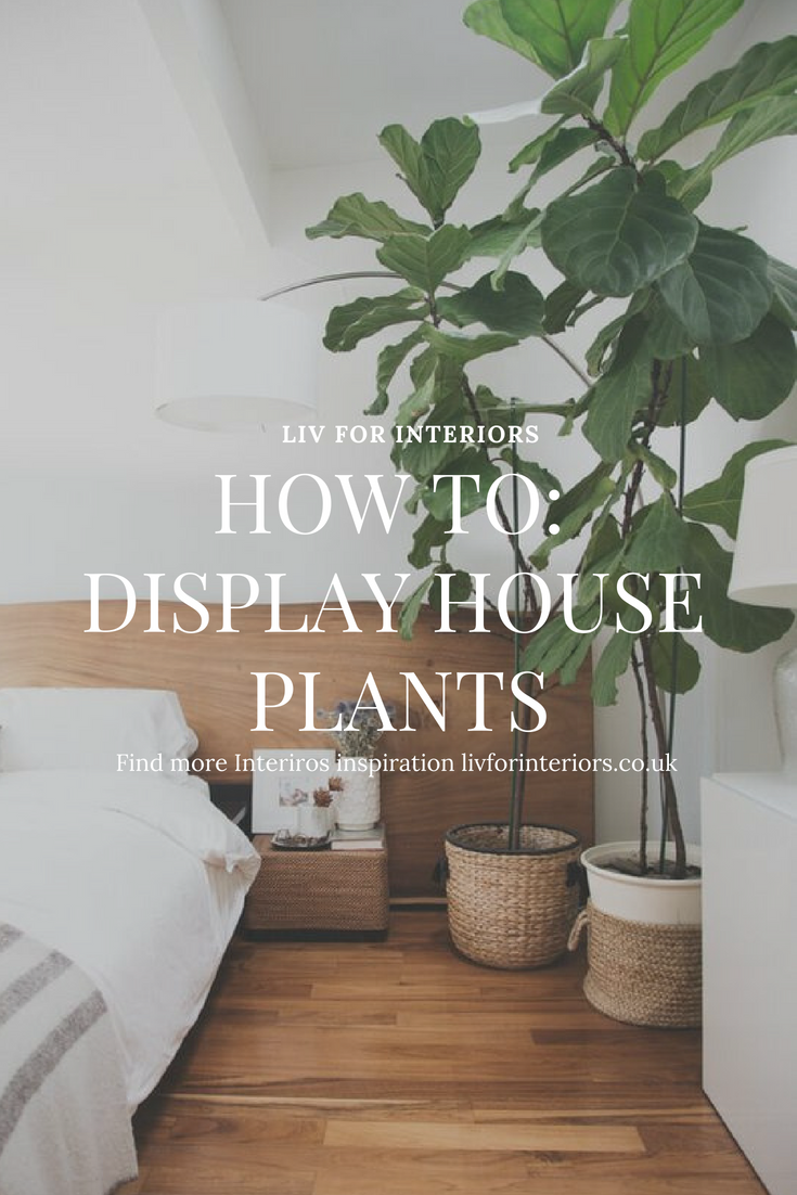 How To Display House Plants — LIV for Interiors