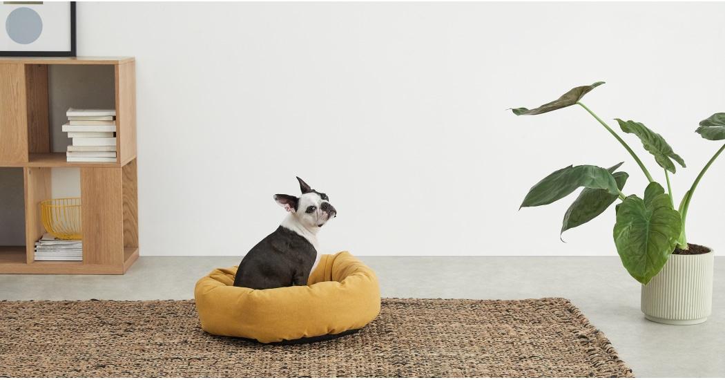 Kysler Mustard Pet Bed - £35
