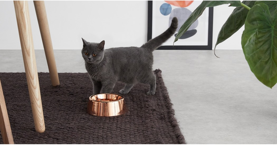 Moxie Copper Pet Bowl - £19