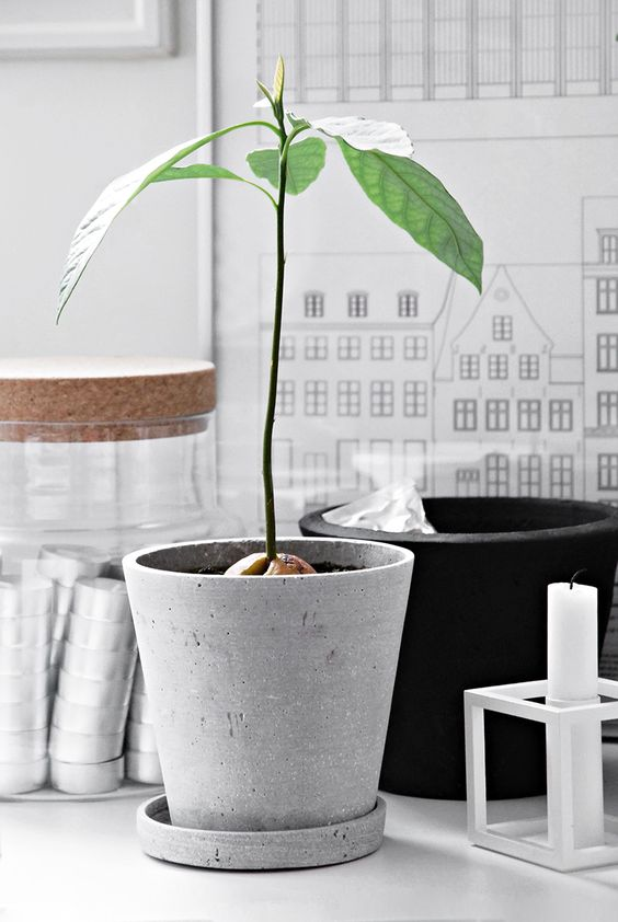 10. Grow Your Own Avocado Tree - Fancy homemade guac whenever you like? Well apparently so does everyone else! Tips on growing your own avocado tree have seen a 101% increase. Why not avoid the sadness of an over- or under-ripe, shop-bought avocado and try growing your own this year?
