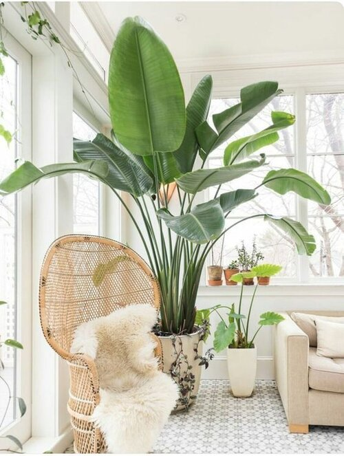 43 Luxury Indoor Plants Ideas For Living Room To Make Your Home More Fresh.jpeg