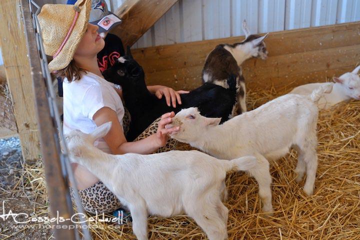Goats & kids!