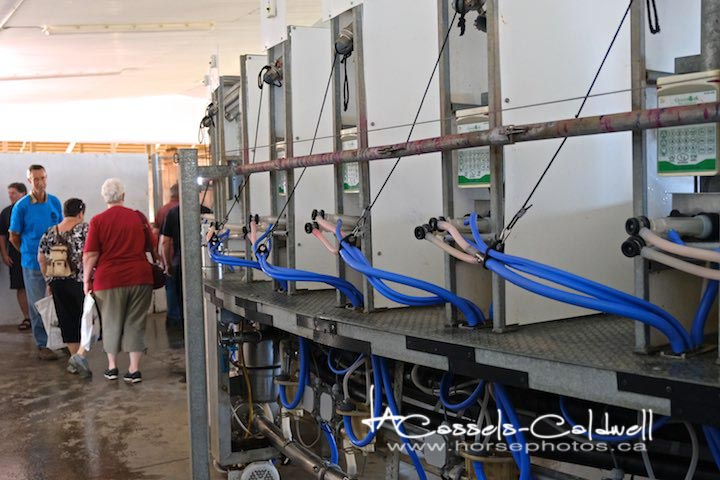 This is a rotary goat milker, it holds 72 goats for milking.