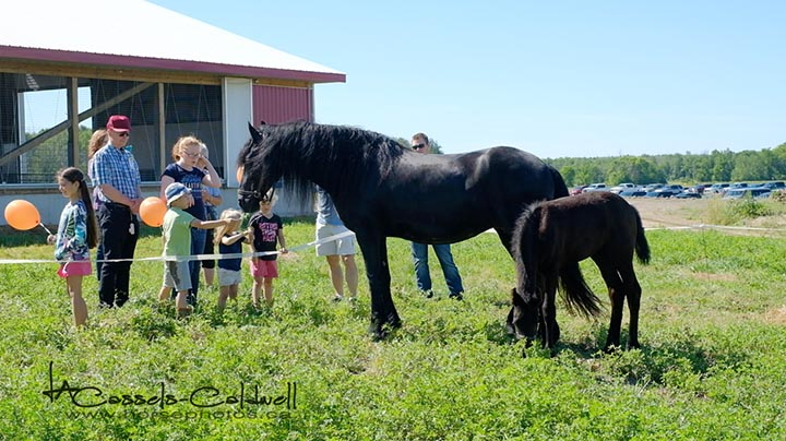 Beautiful Friesian mare & foal from Stonecreek Friesians.