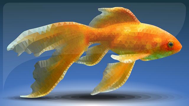 fish-3774184_640.png