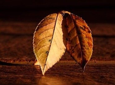 leaf-409258_640.jpg