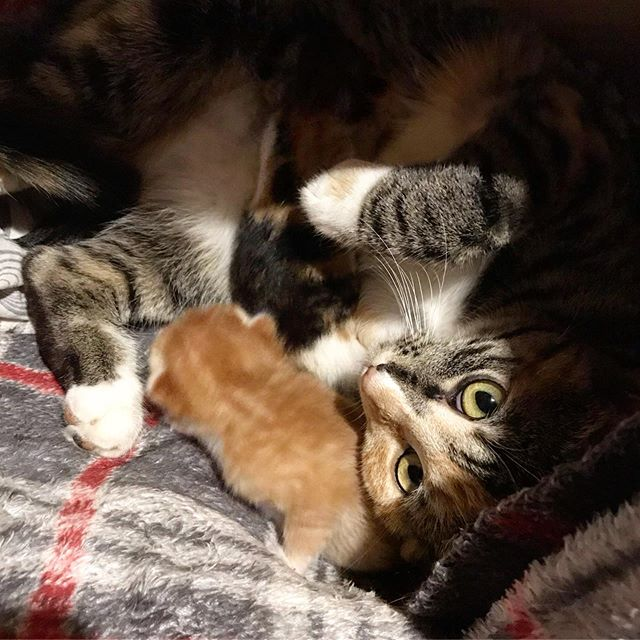 Mama and kittehs