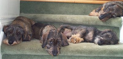Dogs on Stairs.jpg