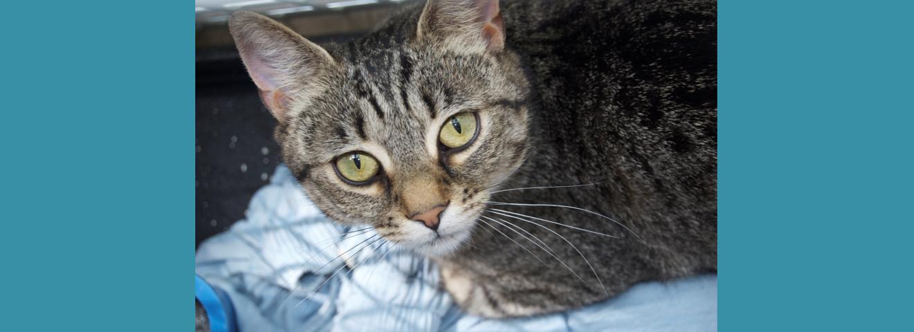 No Kill Animal Rescues Animal Friends Of Lansdowne
