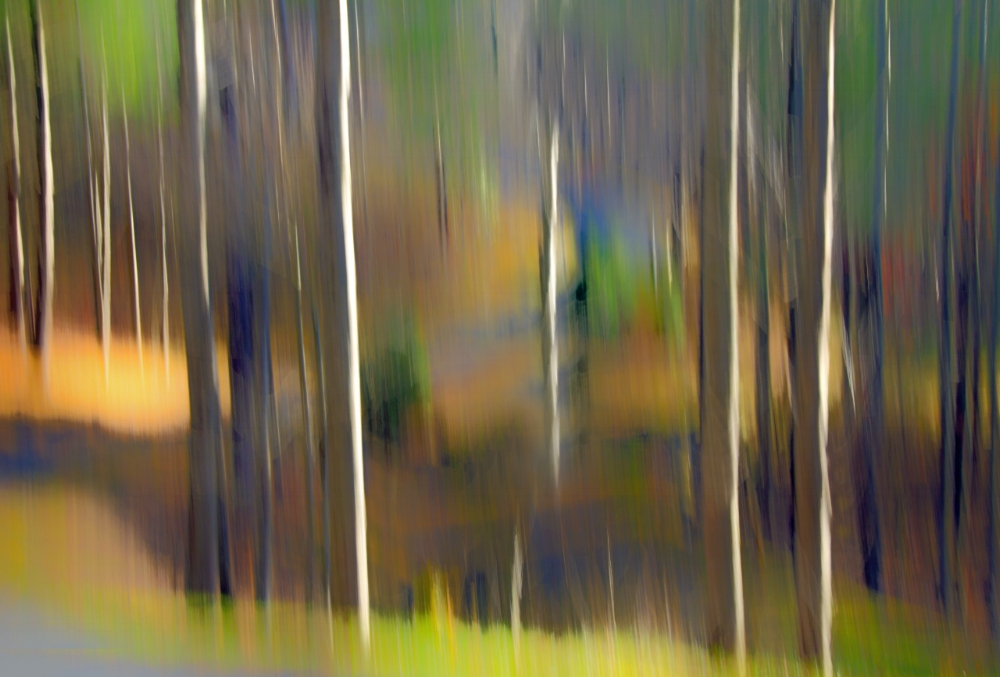 Tree Colors.jpg