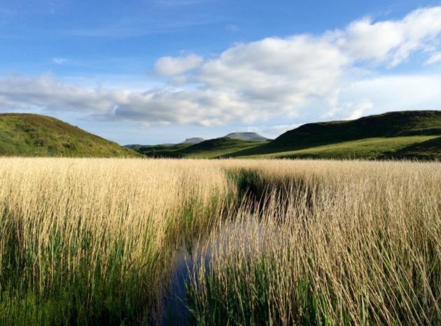skye-grasses-630px.jpg