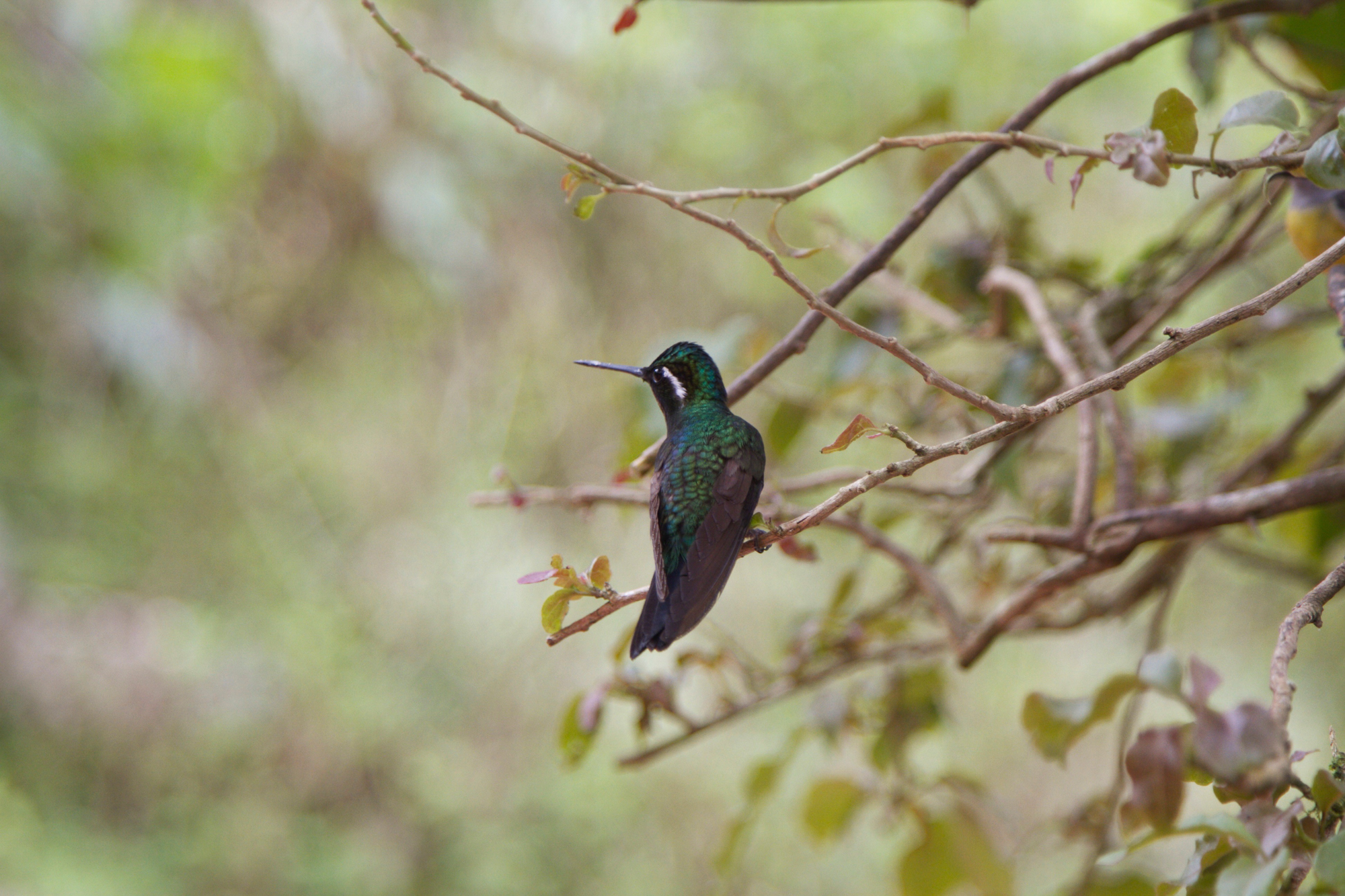 Photo by: Holli Margell of  Native Light Photography  - Hummingbird