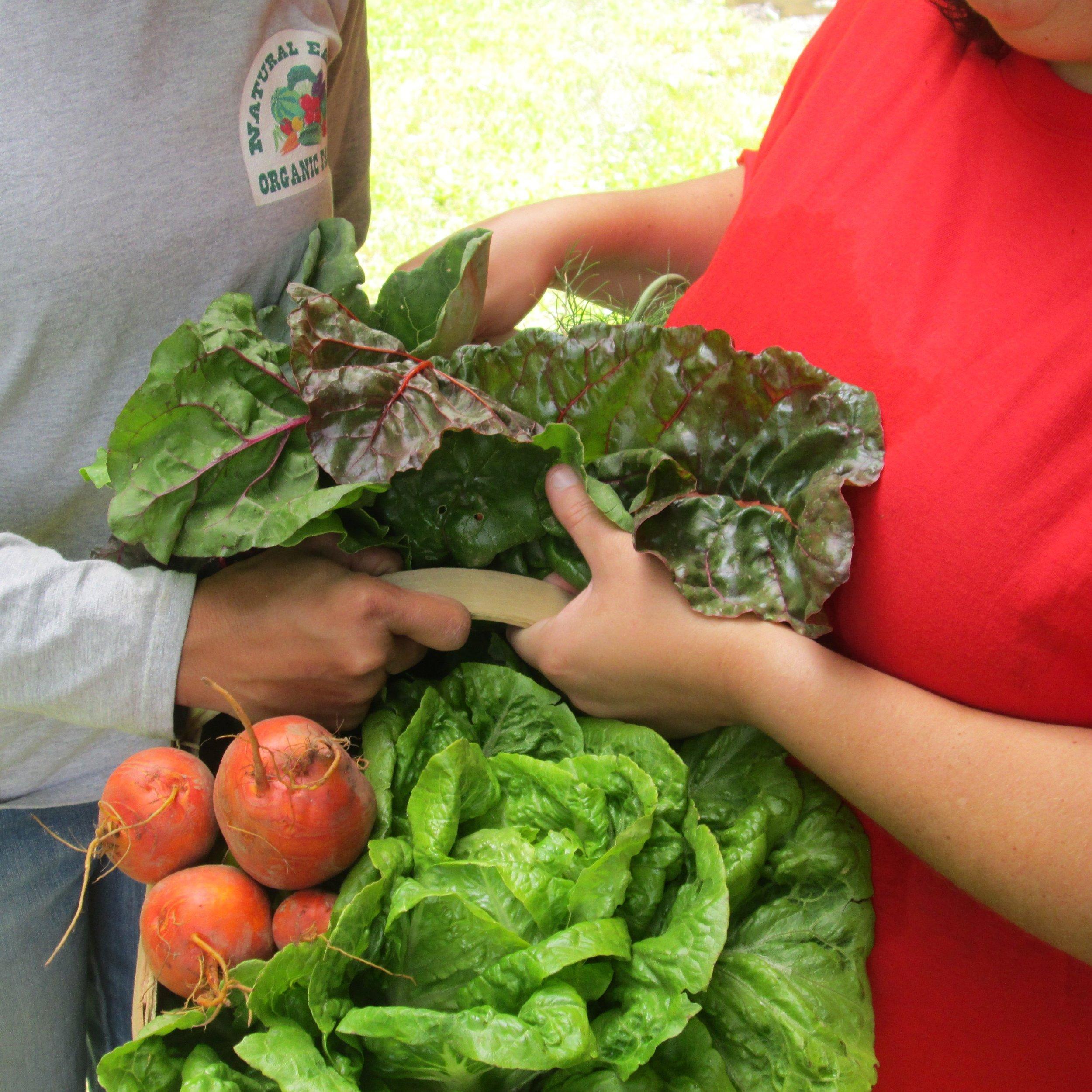 Natural Earth Organic Farms