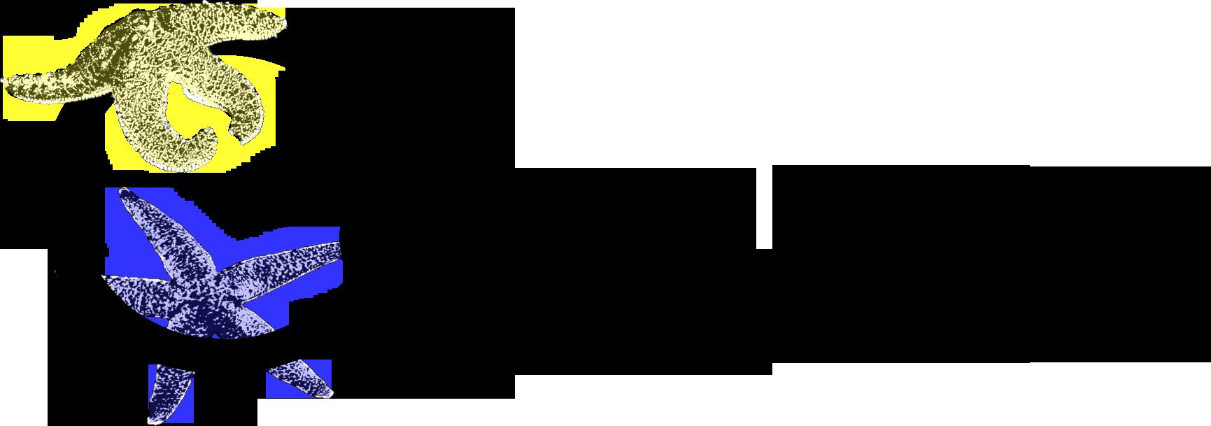 starfish logo.png